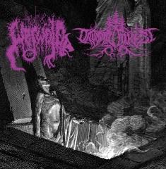 The True Werwolf / Druadan Forest - Split (CD)